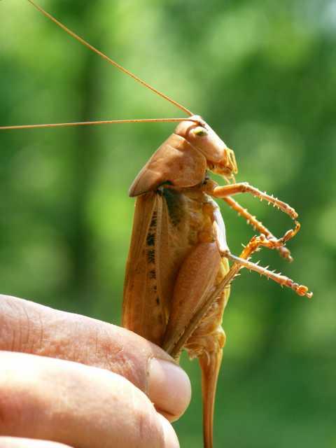 cykady