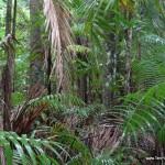 deszczowe-lasy-rownikowe
