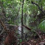 lasy-deszczowe