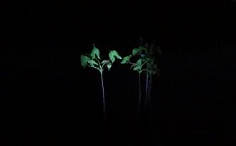 nocne-obserwacje