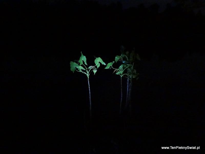 Noc nad Orinoko , nocne obserwacje przyrody