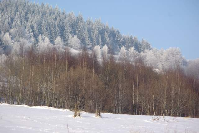 Targoszów, stoki Leskowca
