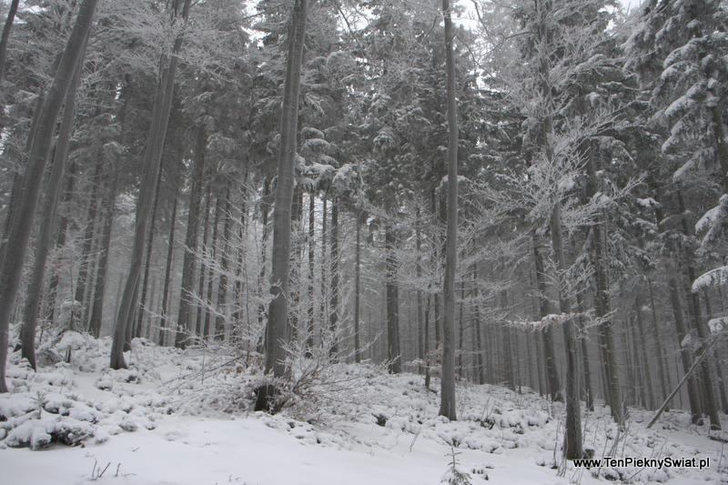 Beskid Śląski Zima