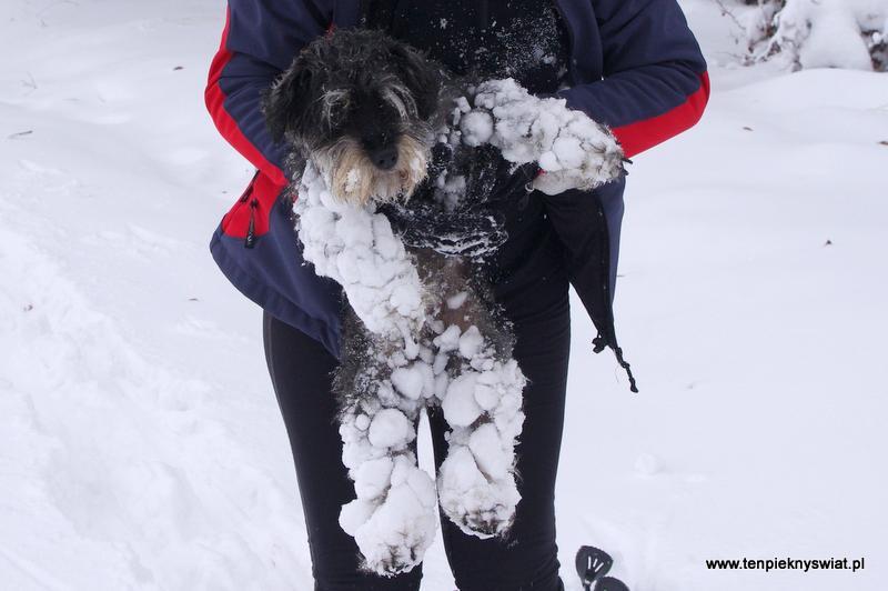 Zabawy psa na śniegu
