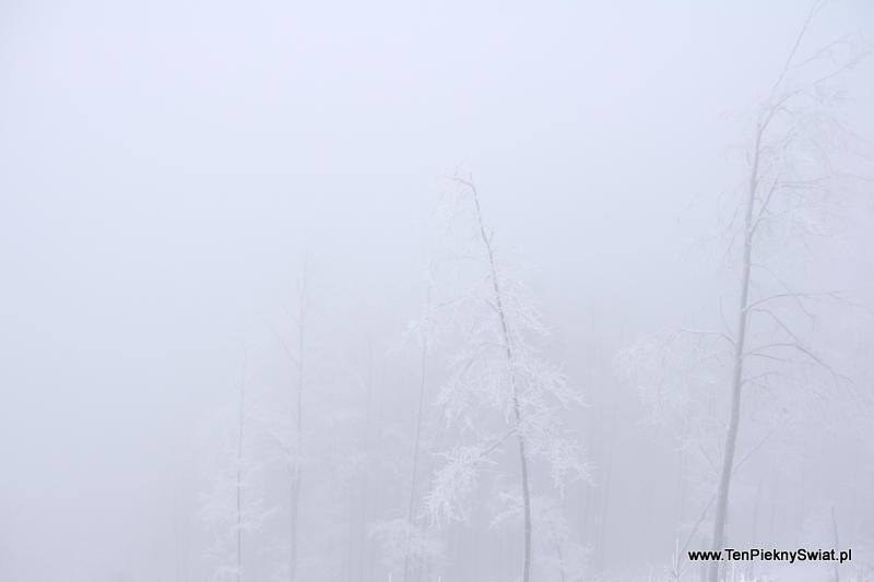 mgła jak mleko