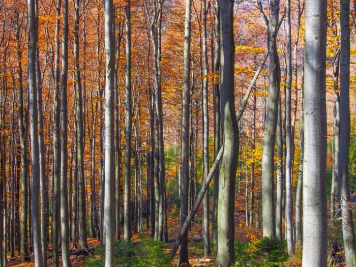 lasy beskidzkie