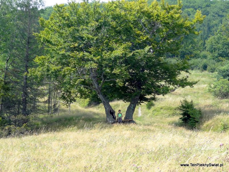 Odpoczynek pod drzewem