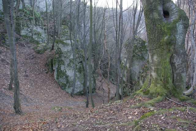Dolina Mnikowska - buczyna naskalna, ostańce