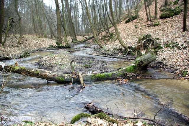 Dolina Mnikowska, rzeka Sanka i łęg