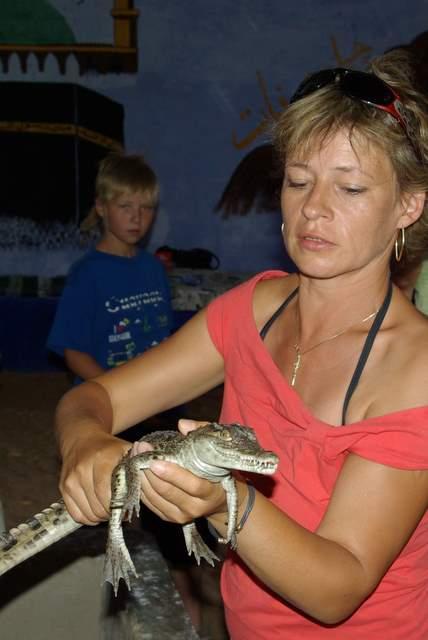 mały krokodyl