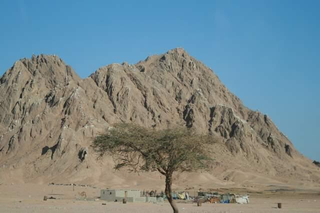 Bociany w Egipcie, Półwysep Synaj