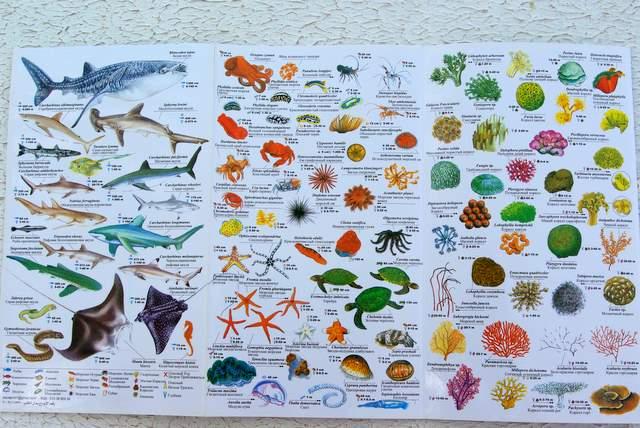 zwierzęta morskie, rafa koralowa