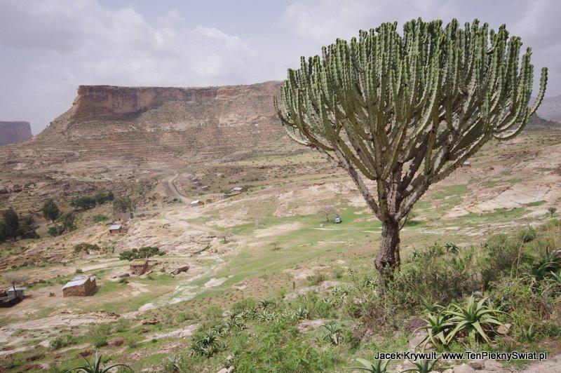 Debre Damo Etiopia klasztor monastyr