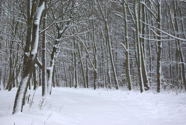 Lasy wokół Pławniowic