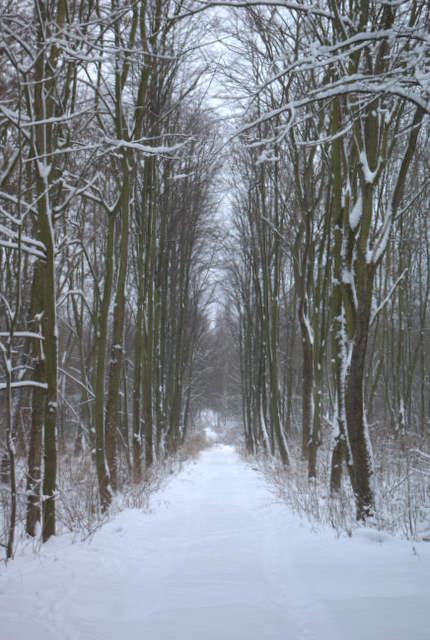Aleja drzew, Pławniowice