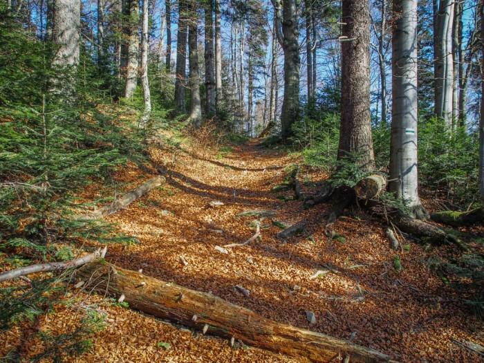 Szlaki w Gorcach na Turbaczyk