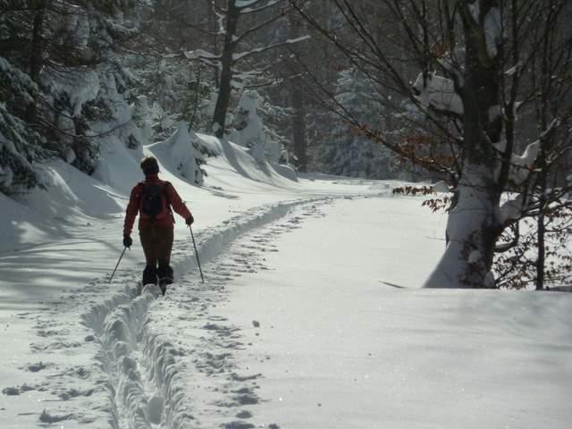 wędrówka narciarska, narciarstwo śladowe, ski tour