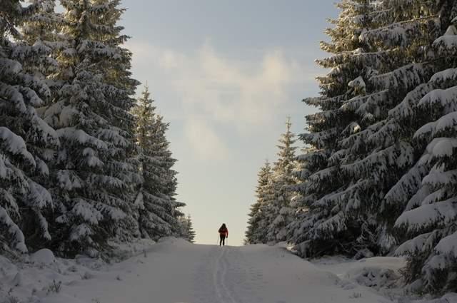 Jakuszyce, trasy biegowe