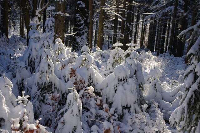 Jakuszyce śnieg