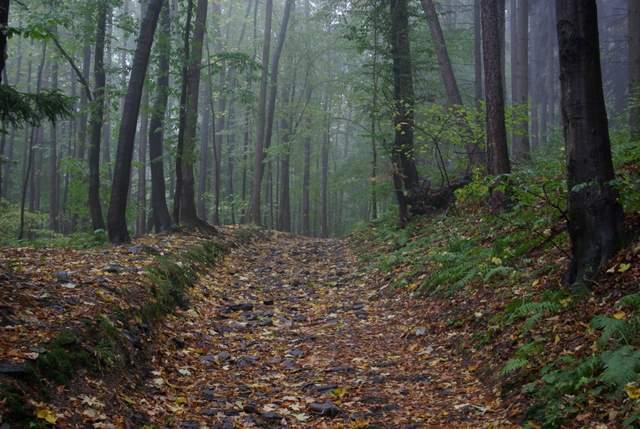 Góry Opawskie, szlak czerwony z Pokrzywnej