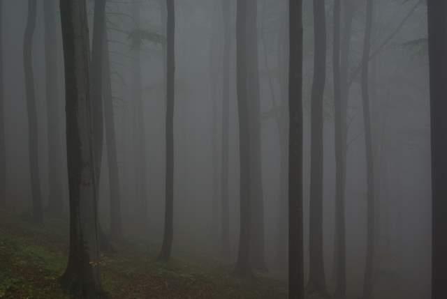 Góry Opawskie, lasy