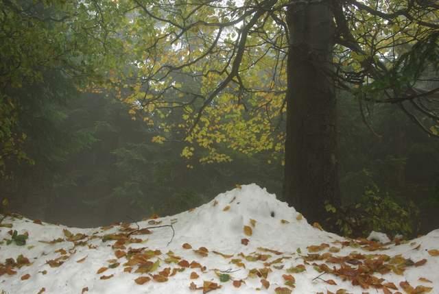jesienne liście w Górach Sowich