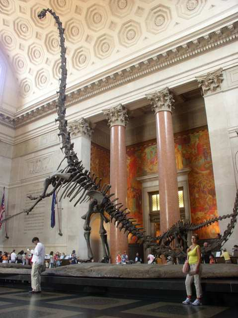 Szkielet dinozaura - Nowy York, Manhattan, Muzeum Historii Naturalnej