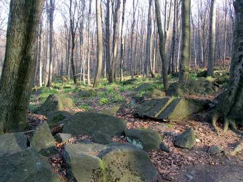 Ślęża, porosłe lasem gołoborze
