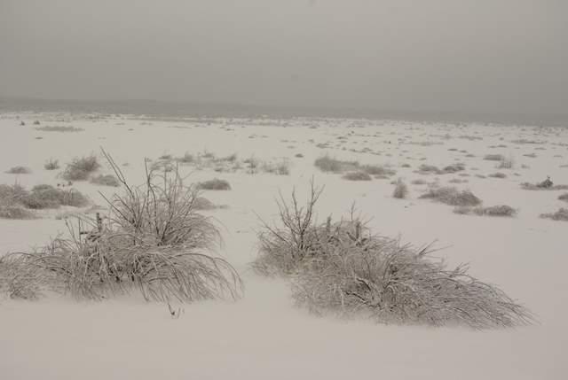 Pustynia Błędowska zimą