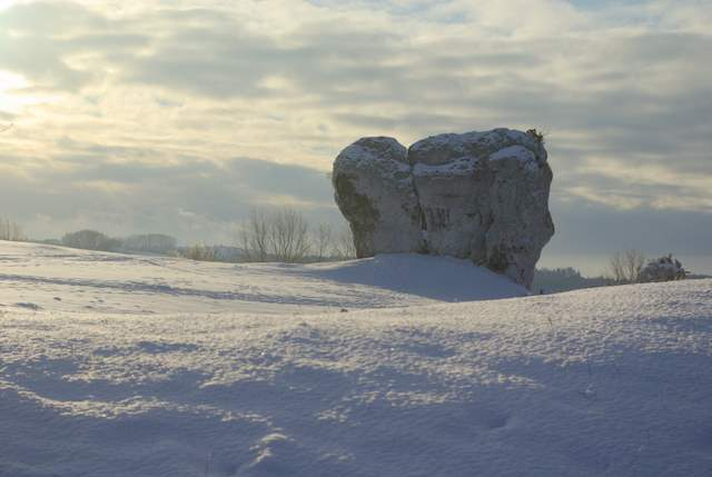 ostaniec na śniegu