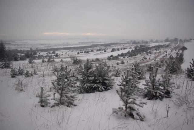 Rzędkowice, widok na pola