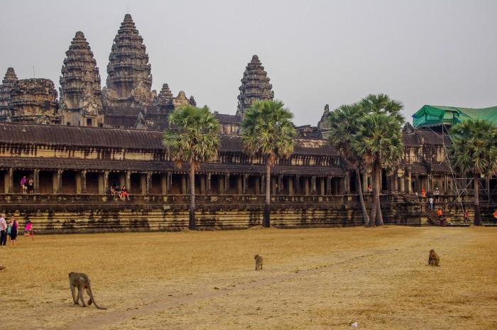 Angkor Wat małpy