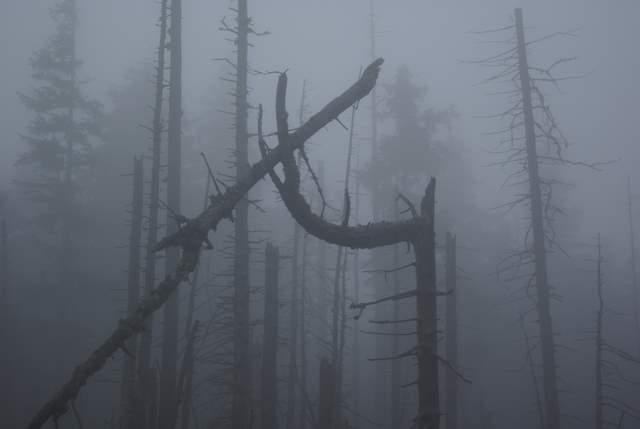 umarły las we mgle