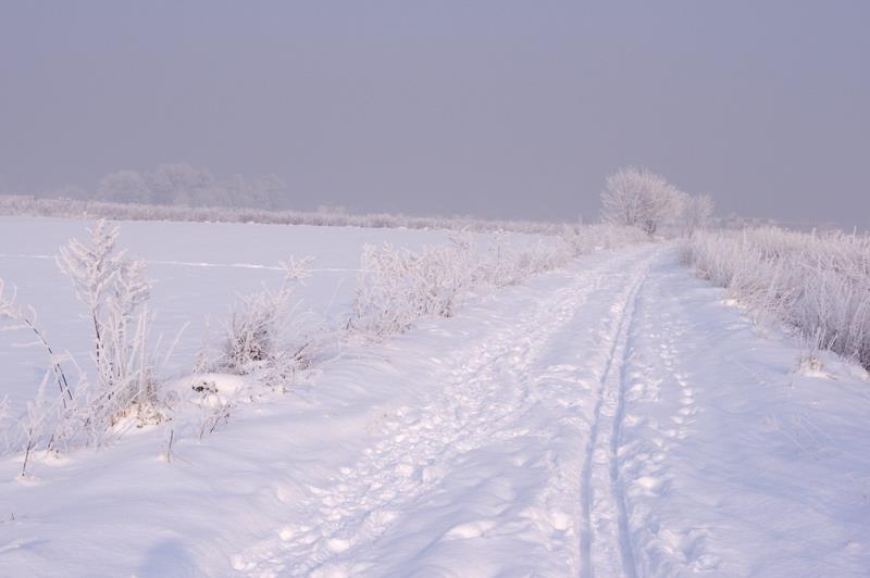 Gliwice trasy biegowe