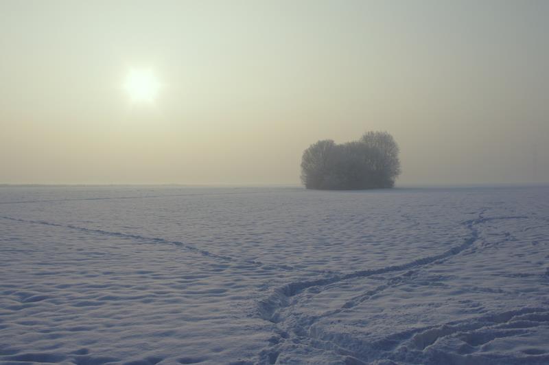 samotna kępa drzew