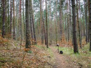 Łeba, Bałtyk, Słowiński Park Narodowy, Kaszuby