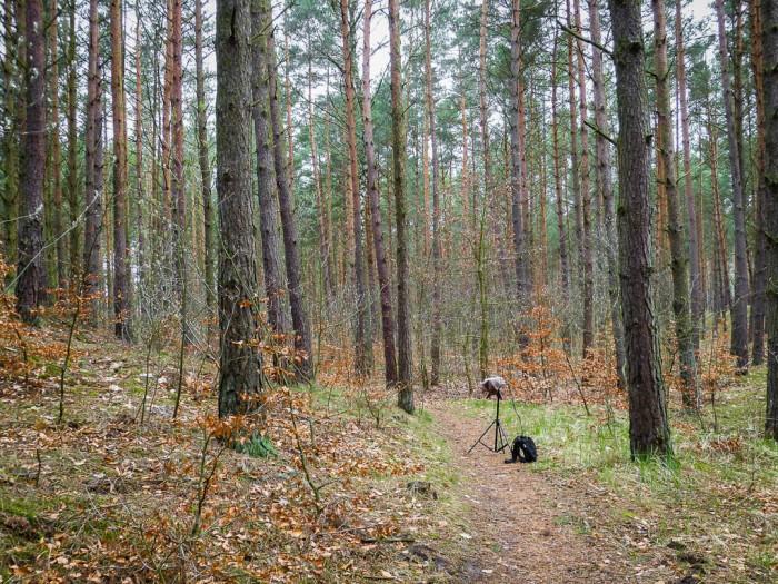 nagrywanie głosów ptaków w Mikoszewie nad morzem Bałtyckim
