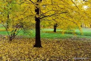 Lesne poszukiwania jesieni