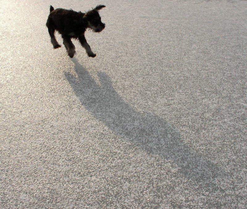 Nakło Chechło - wyścigi psich zaprzęgów