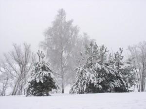 Nakło - Świerklaniec - bieg na nartach