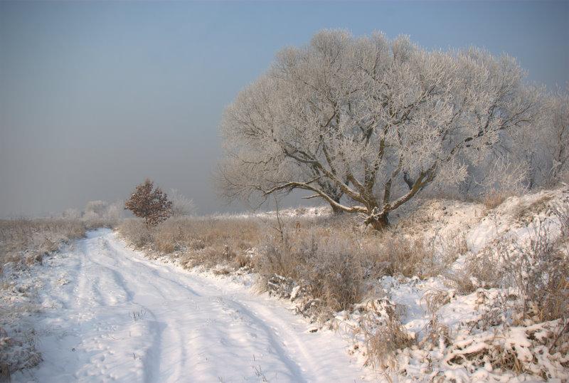 Dzierżno, zimowe krajobrazy