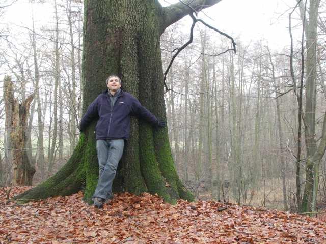 Drzewa pomnikowe