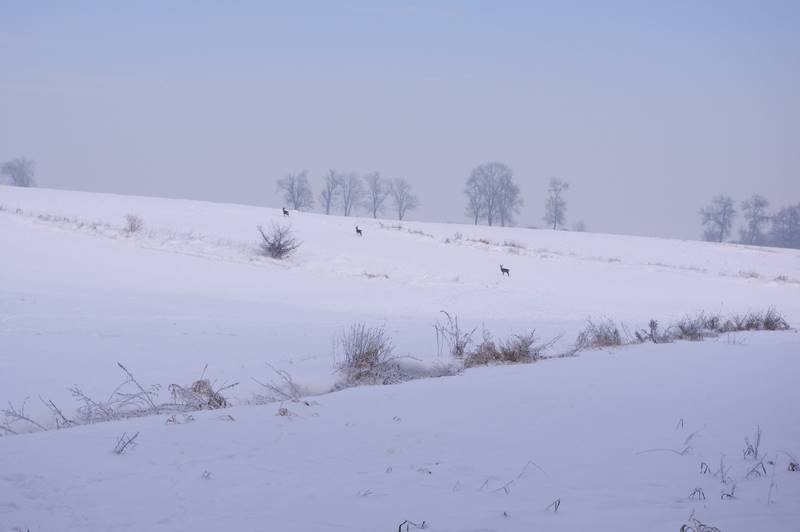 sarenki na polu