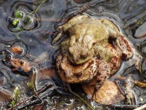 Płazy, żaby, ropuchy i traszki