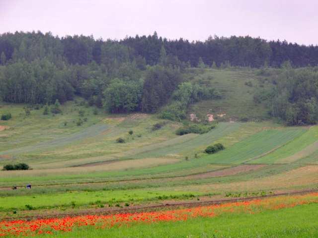 Góry Pińczowskie