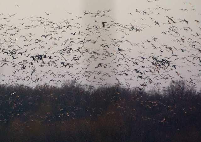 Ptaki nad stawami Łężczok