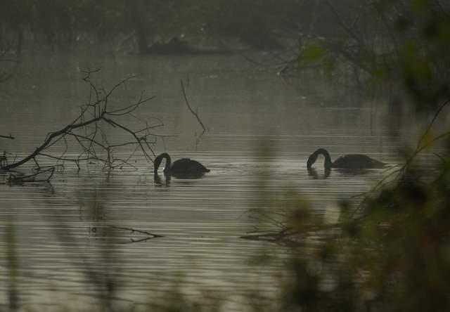 Jezioro Farski ptaki