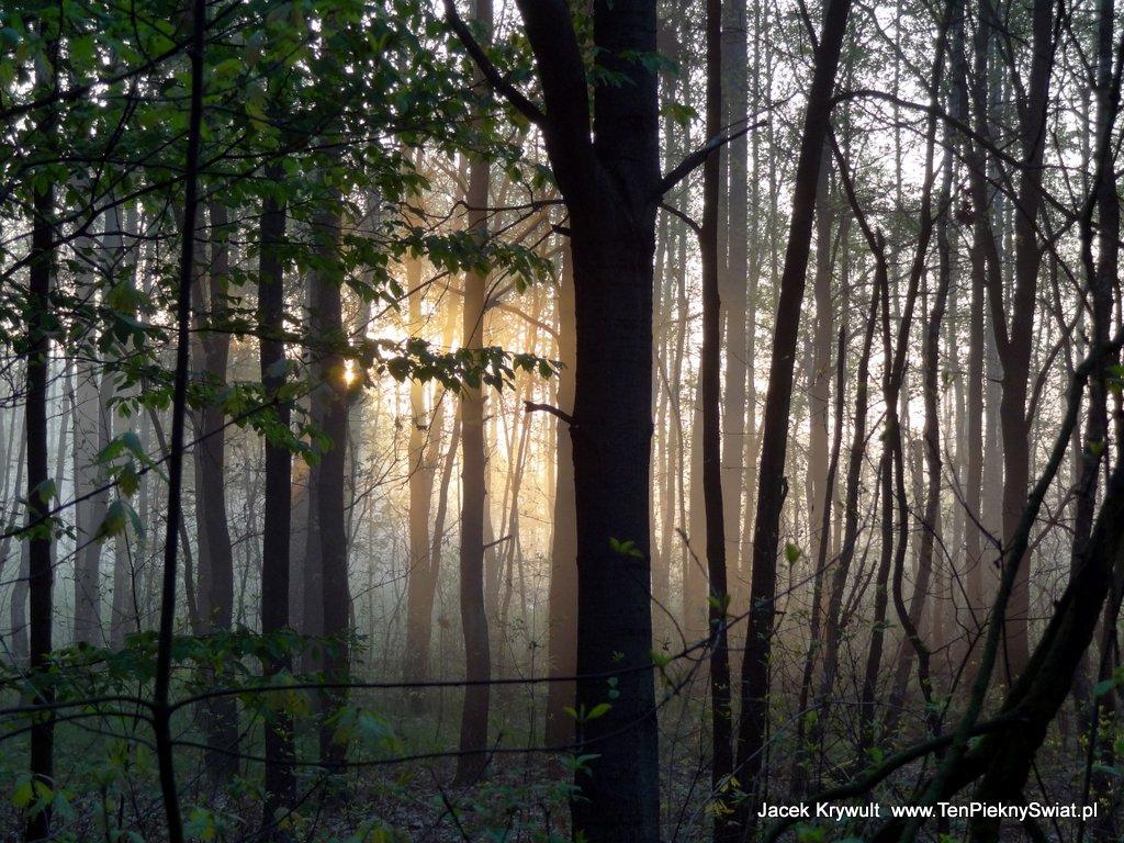 las przed zmrokiem