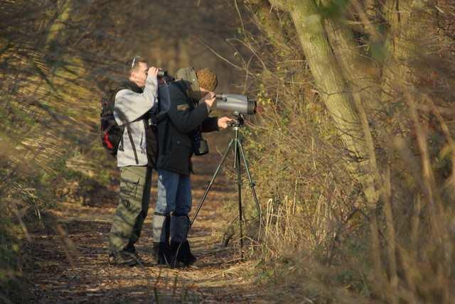 Rezerwat Łężczok, obserwacja ptaków