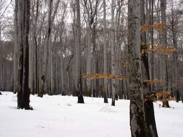 Park Krajobrazowy - buki